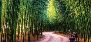 therapeutic path trough a bamboo forest