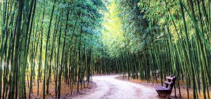 therapeutic bamboo forest road with a bench